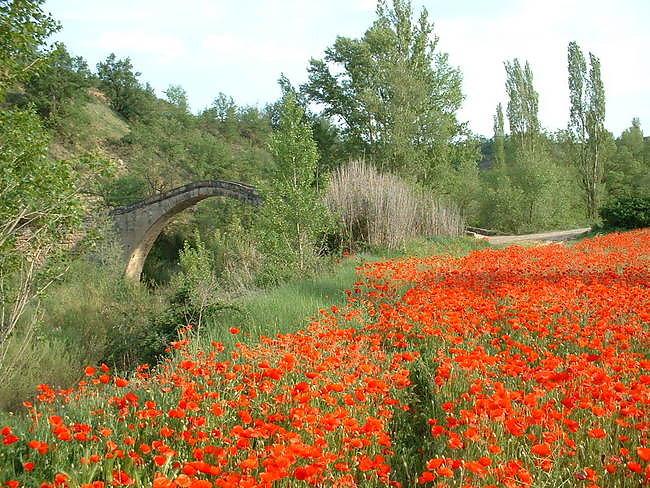 Puente l'albarda au printemps